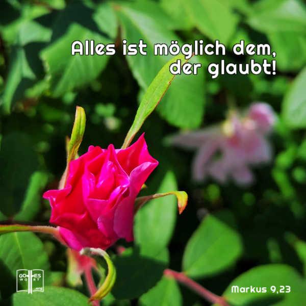 Gottes Bekräftigung ... alles ist möglich dem, der glaubt! Mk 9,23