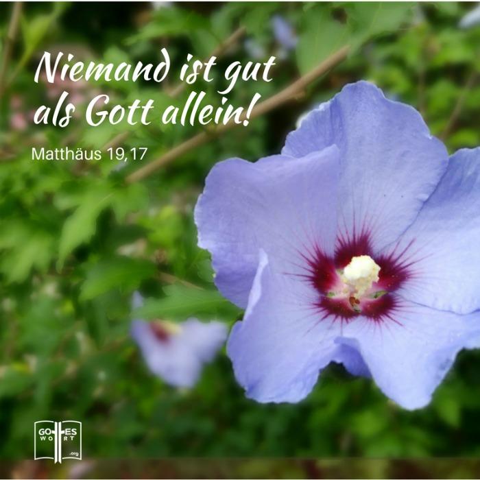 Niemand ist gut als Gott allein! Matthäus 19,17 Lese: https://www.gottes-wort.com/nahe.html