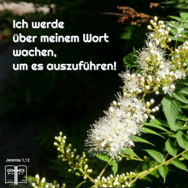 ✚ Ich werde über meinem Wort wachen, um es auszuführen. Jeremia 1,12 HALLELUJA! Mehr: https://www.gottes-wort.com/auferstehung-jesu-christi.html #jesuschristus #gotteswort  #gott