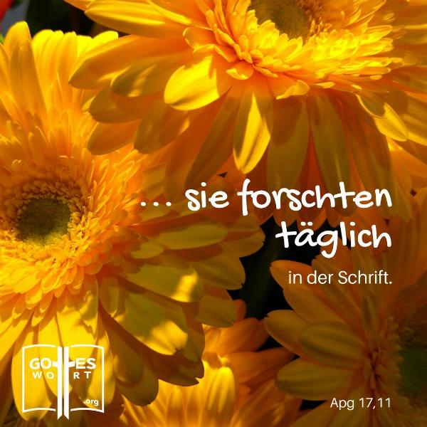 Die Bibel ist manchmal einfacher zu verstehen wenn es mit Bildern oder Fotos betont wird. (gelbe Blumen)