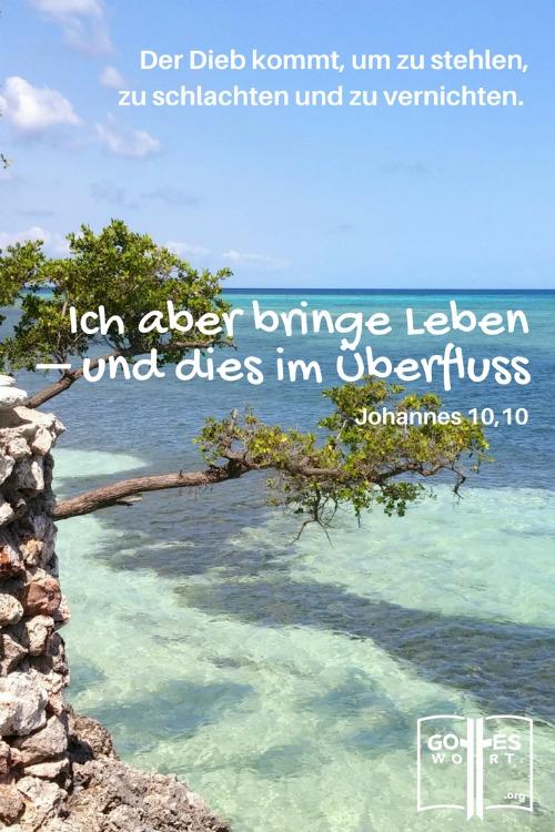 Der Dieb kommt, um zu stehlen, zu schlachten und zu vernichten. Johannes 10,10  Holguin, Kuba