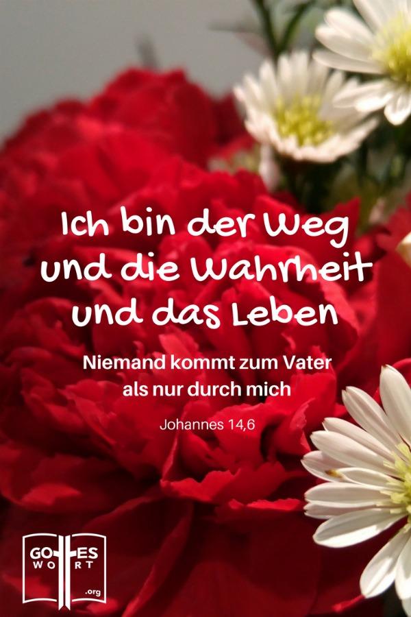 Ich bin der Weg und die Wahrheit und das Leben. Johannes 14,6 (rote Nelken)