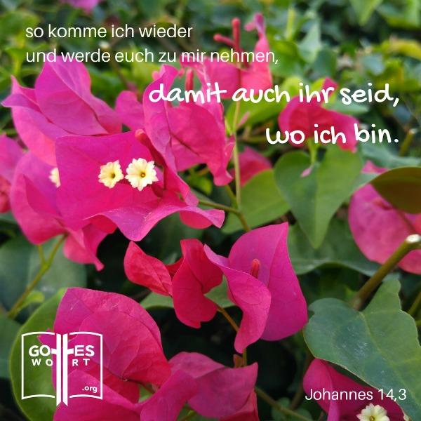.... ich wieder kommen und euch zu mir holen, damit auch ihr dort seid, wo ich bin. Johannes 14,3 #jesus #gotteswort https://www.gottes-wort.com/alpha-und-omega.html
