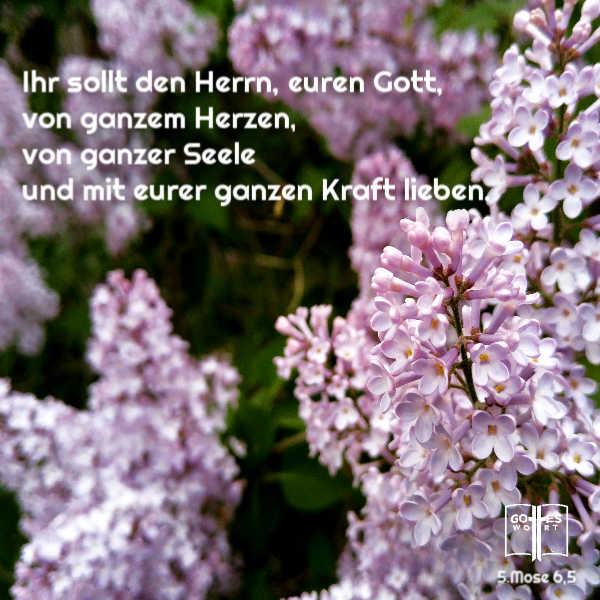 Ihr sollt den Herrn, euren Gott, von ganzem Herzen, von ganzer Seele und mit eurer ganzen Kraft lieben. 5.Mose 6,5