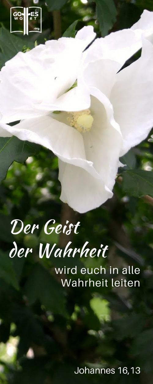 Der Geist der Wahrheit ... Johannes 16,13 Lese: https://www.gottes-wort.com/rotes-licht.html