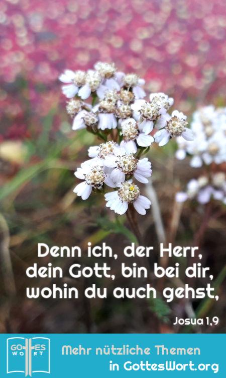 ✚ Denn ich, der Herr, dein Gott, bin bei dir, wohin du auch gehst, Josua 1,9 Lese: https://www.gottes-wort.com/daemonen.html #bibel #jesuschristus #daemonen #gotteswort