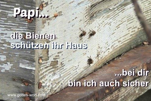 Papi … die Bienen schützen ihr Haus … bei dir bin ich auch sicher.