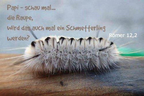 Papi … schau mal … die Raupe, wird das auch mal ein Schmetterling werden?  Roemer 12,2