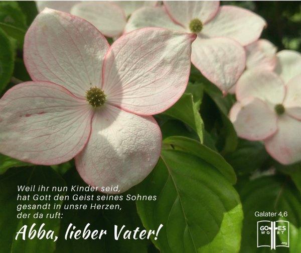 ✚  Unser himmlischer Vater ist unser Abba, unser Papi! Kennst du ihn so? Galater 4,6 https://www.gottes-wort.com/papi.html #papi #gotteswort #abba