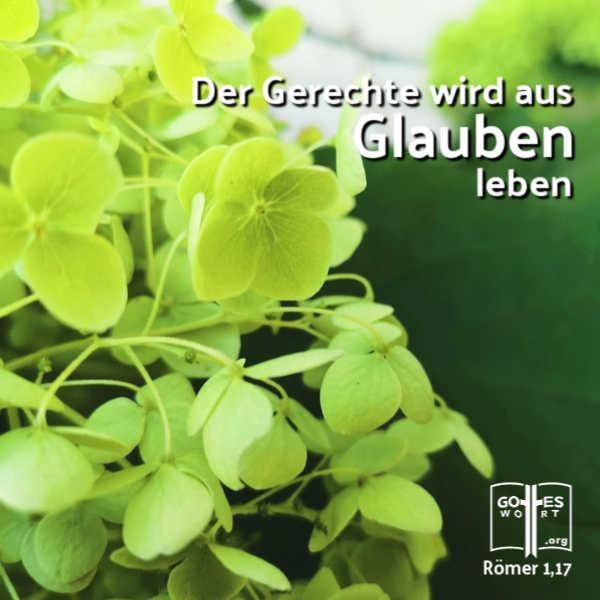 ✚ Der Gerechte wird aus Glauben leben. Römer 117 Lese https://www.gottes-wort.com/spricht.html #gottspricht #glauben #leben