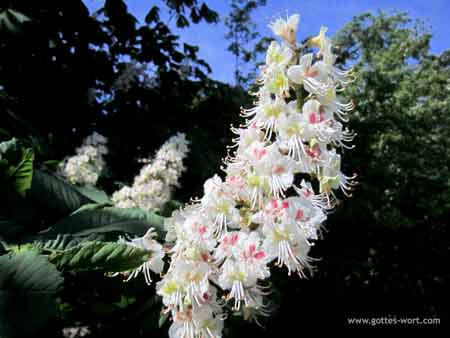 Blume -- Büttjebüll, Nordfriesland