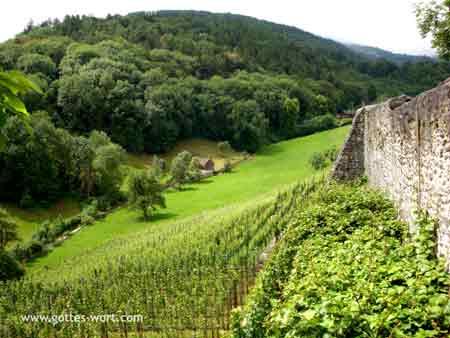 Weinberg Übersicht  - Schloss Werdenberg, Schweiz