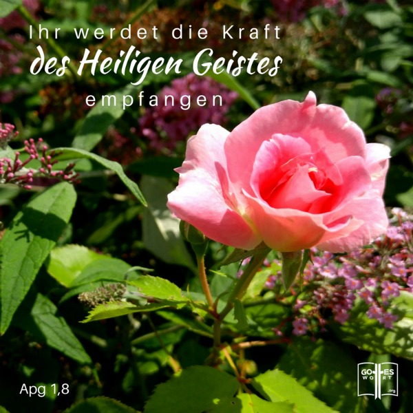 ihr werdet die Kraft des Heiligen Geistes empfangen. Apg 1,8 Die heilige Geistestaufe erklärt:  http://www.gottes-wort.com/geistestaufe.html