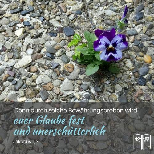 Das größte Hindernis im christlichen Leben ist nicht Gottes unfehlbares Wort zu vertrauen. Was soll man tun? Lese: http://www.gottes-wort.com/glauben.html