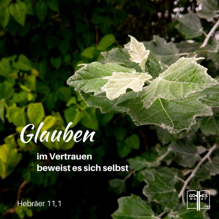 Der Glaube ...  im Vertrauen beweist es sich selbst Hebräer 11.1  Lese http://www.gottes-wort.com/glaube.html