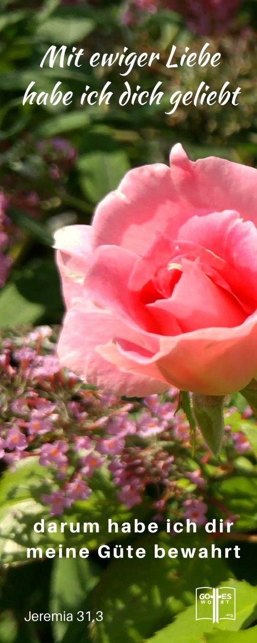 Mit ewiger Liebe habe ich dich geliebt. Darum have ich dir meine Guete bewahrt. Jeremia 31,1 (rosa Rose)