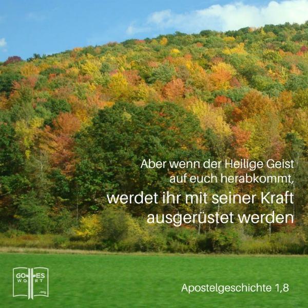 Gott und sein Wort als Prophetie