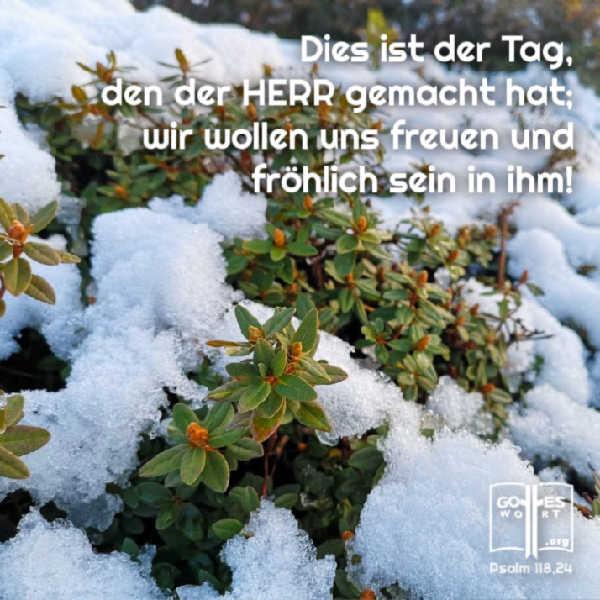 ✚ Dies ist der Tag, den der HERR gemacht hat; wir wollen uns freuen und fröhlich sein in ihm! psalm 118,24 https://www.gottes-wort.com/lieben.html #loben #lieben #lachen #preisen
