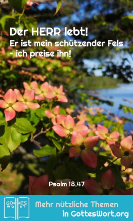 Der HERR lebt! Er ist mein schützender Fels – ich preise ihn!  Psalm 18,47