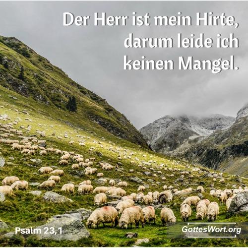 Der Herr ist mein Hirte, darum leide ich keinen Mangel ... Psalm 23,1