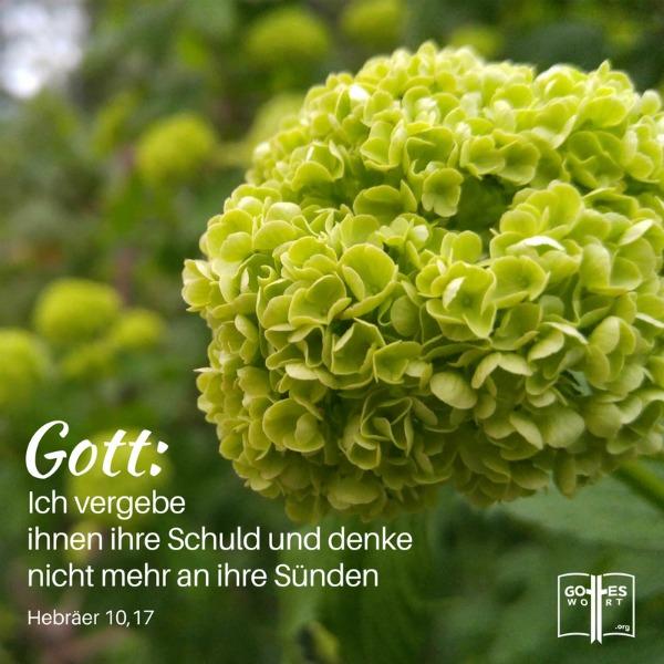 Vergeben und Vergessen. Das ist unser Gott! Hebräer 10,17 https://www.gottes-wort.com/vergeben-und-vergessen.html  #verfehlung #vergebung #suende #gotteswort