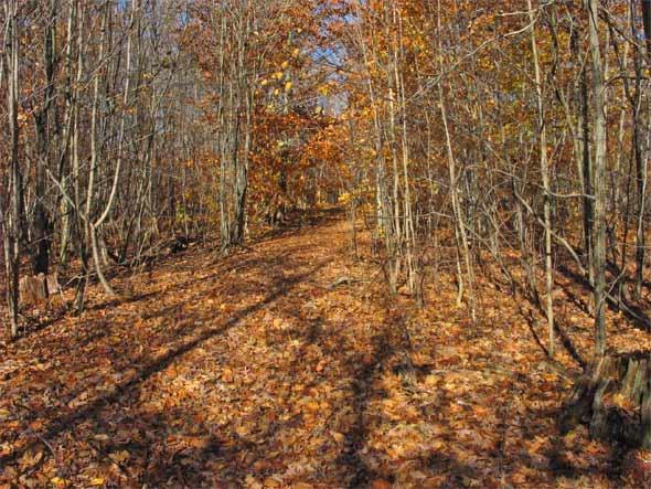 Waldweg im Herbst - Ontario, Kanada