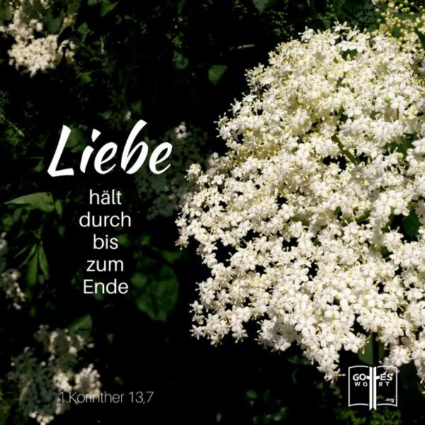 1.Korinther 13,7