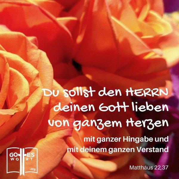 Du sollst den Herrn, deinen Gott, lieben, … mit deinem ganzen Herzen und mit deiner ganzen Seele und mit deinem ganzen Denken. Matthäus 22,37