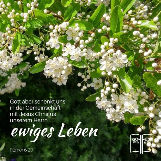 Der Lohn, den die Sünde auszahlt, ist der Tod. Gott aber schenkt uns in der Gemeinschaft mit Jesus Christus, unserem Herrn, ewiges Leben. Römer 6,23 weisse Blumen