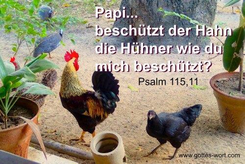 Papi … beschützt der Hahn die Hühner wie du mich beschützt? Psalm 115,11