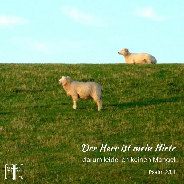Zehn Namen Gottes sind offenbart im Psalm 23. Die Antwort: https://www.gottes-wort.com/namen-gottes.html