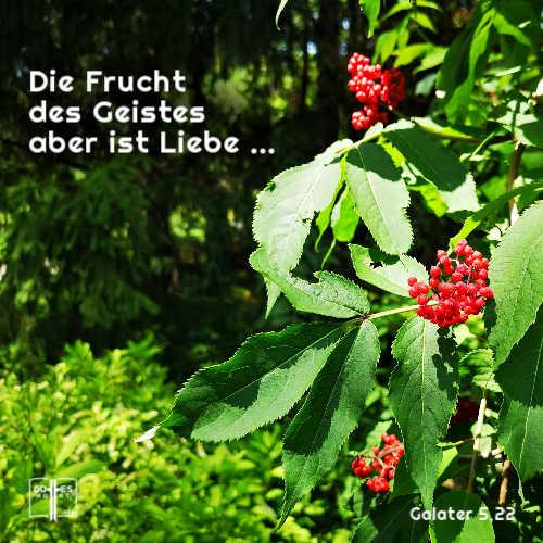 Die Frucht des Geistes aber ist Liebe, Freude, Friede, Langmut, Freundlichkeit, Güte, Treue, Sanftmut, Selbstbeherrschung. Galater 5,11