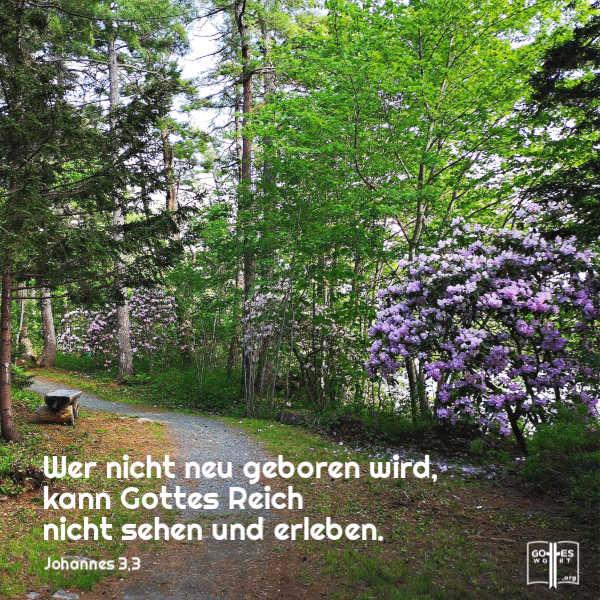 Wer nicht neu geboren wird, kann Gottes Reich nicht sehen und erleben. Johannes 3,3 Lese: https://www.gottes-wort.com/heilungsprozess.html #neugeboren #gotteswort #bibel