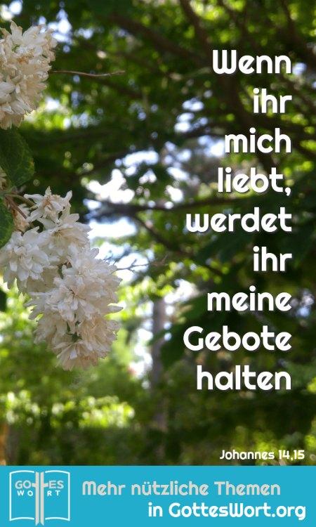 ✚  Die Botschaft: Wenn ihr mich liebt, werdet ihr meine Gebote halten. Johannes 14,15 https://www.gottes-wort.com/botschaft.html #gotteswort #botschaft #leiben #gebote