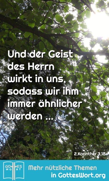 ✚ Und der Geist des Herrn wirkt in uns, sodass wir ihm immer ähnlicher werden ... HALLELUJA! Lese: https://www.gottes-wort.com/kreuzweg.html #entscheidung #gotteswort #heute