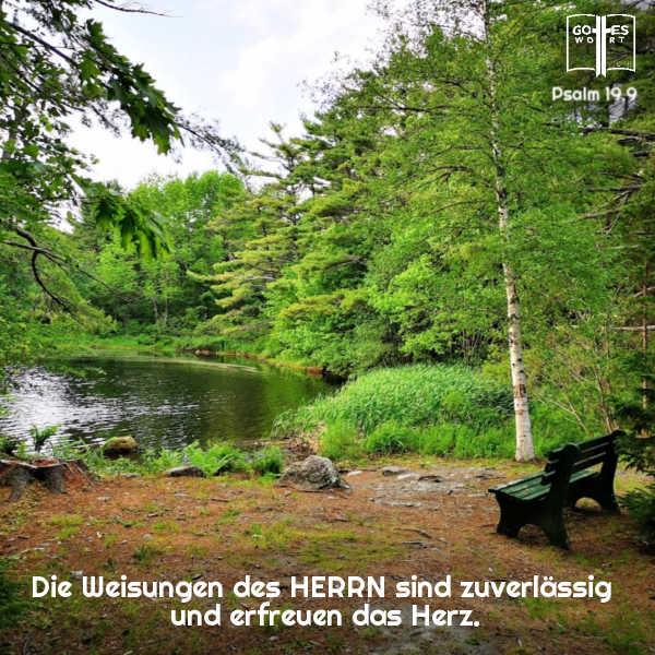 Die Weisungen des HERRN sind zuverlässig und erfreuen das Herz. Psalm 19,9