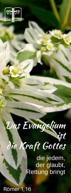 ✚ Das Evangelium ist die Kraft Gottes, die jedem, der glaubt, Rettung bringt. Römer 1,16 Schaue: https://www.gottes-wort.com/evangelium.html #gotteswort #evangelium #botschaft
