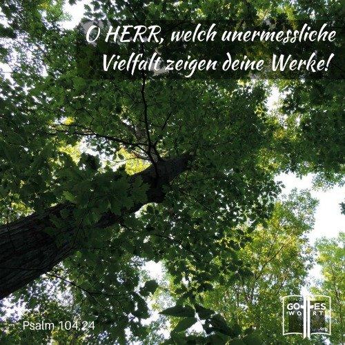 Weisheit ... einer der Eigenschaften Gottes ...  Psalm 104,24